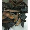 大水蛭矾水水蛭 大水蛭 矾水 国药品质 扬我中华医药